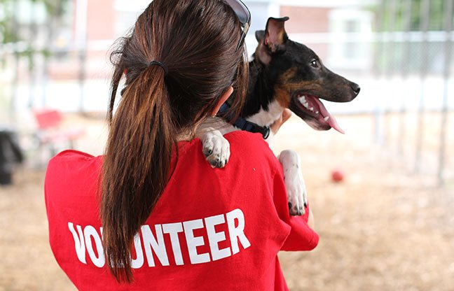 Volunteer with animals