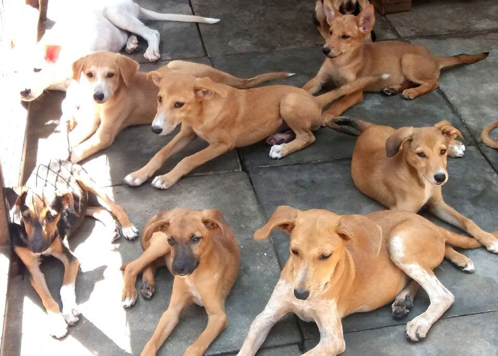 Uganda Society for the Protection & Care of Animals' shelter