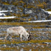 Drifters Guide Svalbard Experience Expedition